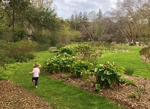 Exploring Nature In Los Angeles U2013 Descanso Gardens